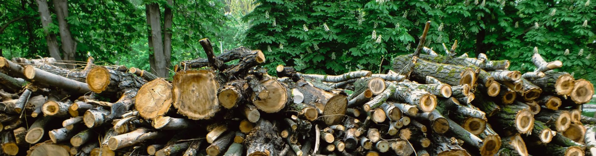 A photo of a firewood stack